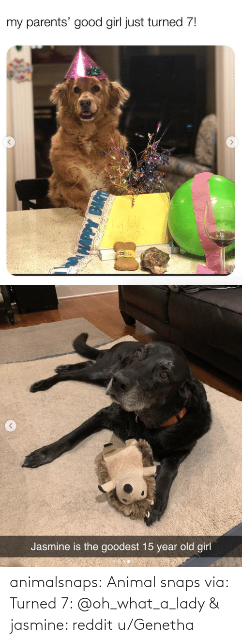 jasmine: animalsnaps: Animal snaps via: Turned 7: @oh_what_a_lady & jasmine: reddit u/Genetha