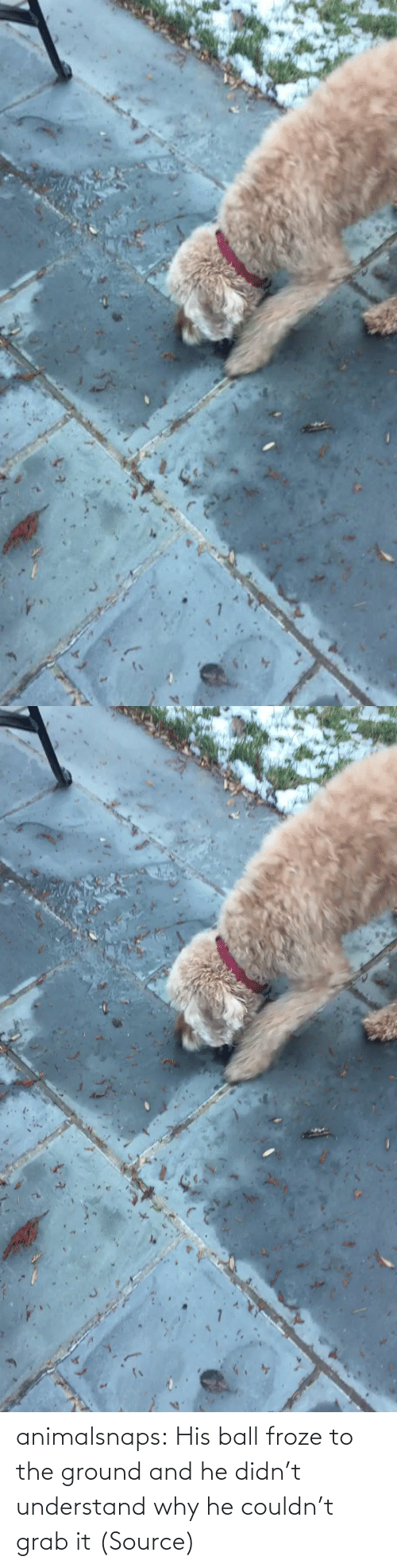 His: animalsnaps:  His ball froze to the ground and he didn't understand why he couldn't grab it (Source)