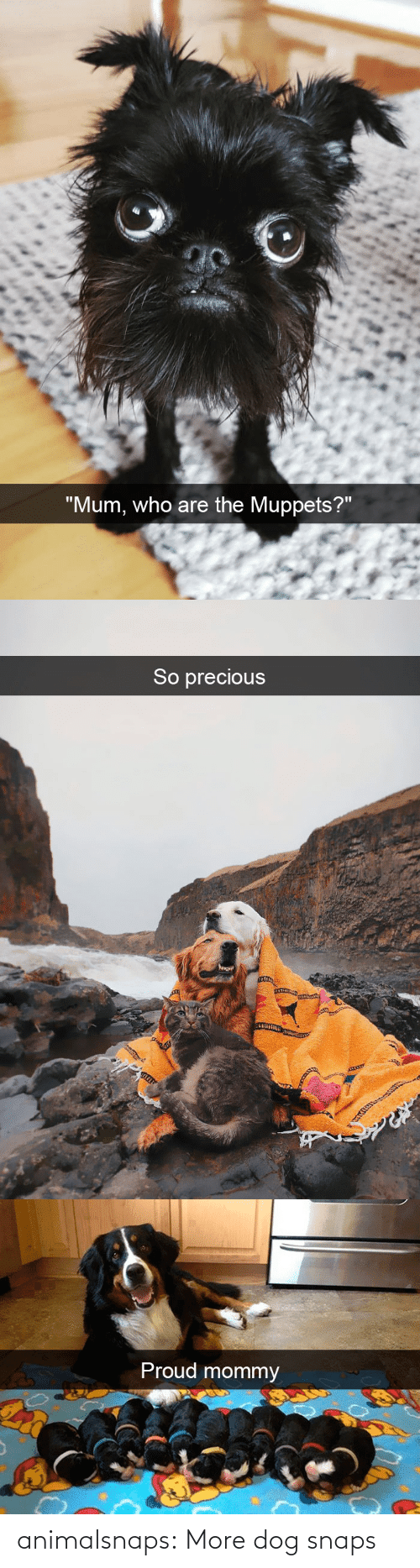 snaps: animalsnaps:  More dog snaps