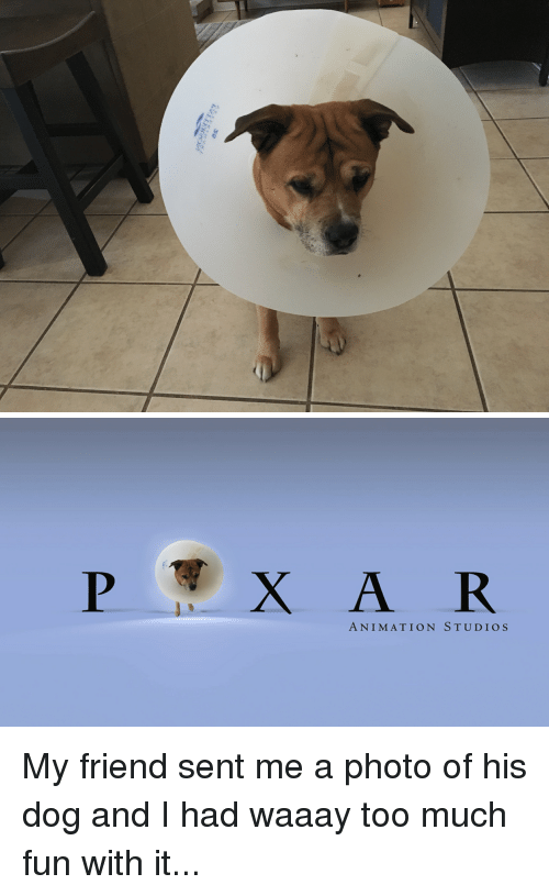 Too Much, Animation, and Dog: ANIMATION STUDIOS My friend sent me a photo of his dog and I had waaay too much fun with it...