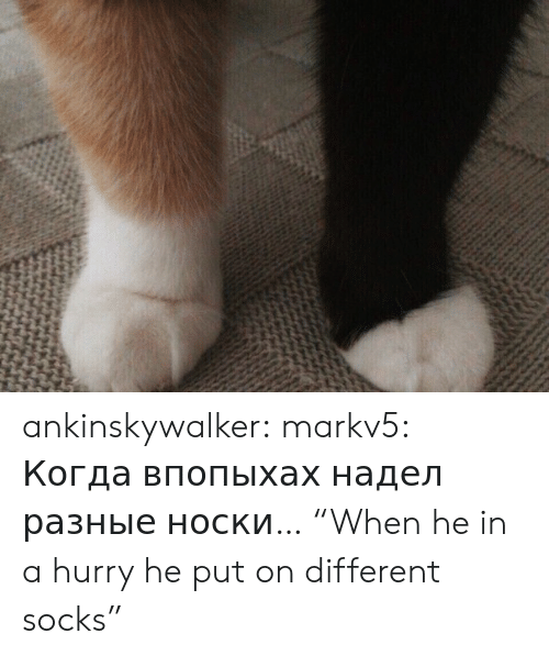 "Put On: ankinskywalker:  markv5:  Когда впопыхах надел разные носки…  ""When he in a hurry he put on different socks"""