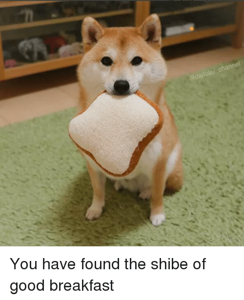 Shibes: annei You have found the shibe of good breakfast