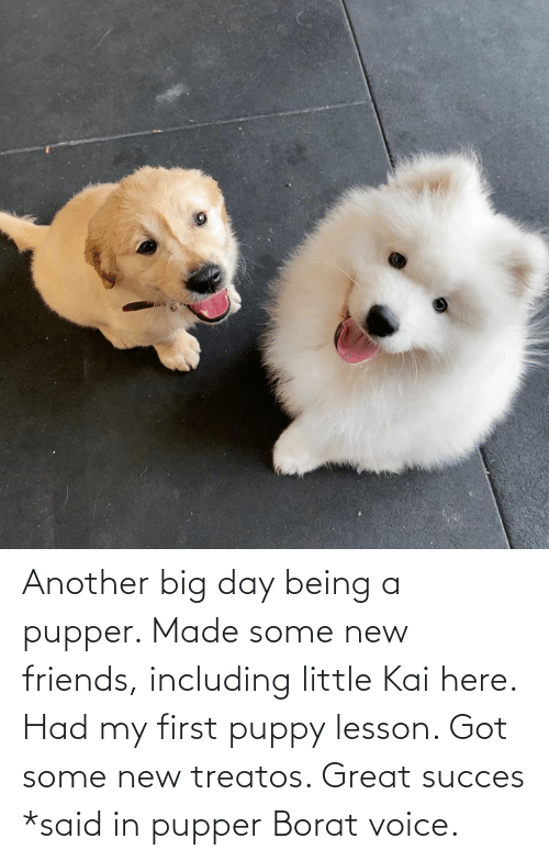 Borat: Another big day being a pupper. Made some new friends, including little Kai here. Had my first puppy lesson. Got some new treatos. Great succes *said in pupper Borat voice.