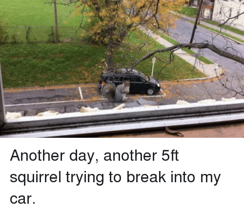 Break, Squirrel, and Another: Another day, another 5ft squirrel trying to break into my car.