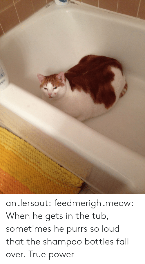 Fall, Target, and True: antlersout:  feedmerightmeow:  When he gets in the tub, sometimes he purrs so loud that the shampoo bottles fall over.  True power