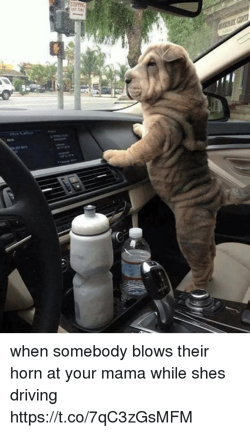 Driving, Girl Memes, and Mom: ANY TIHE  Mom  8575 when somebody blows their horn at your mama while shes driving https://t.co/7qC3zGsMFM