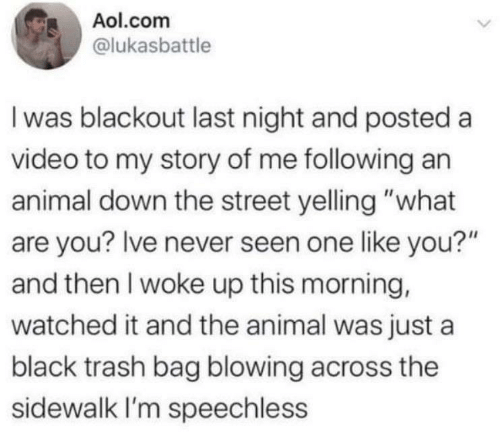 "Last: Aol.com  @lukasbattle  I was blackout last night and posted a  video to my story of me following an  animal down the street yelling ""what  are you? Ive never seen one like you?""  and then I woke up this morning,  watched it and the animal was just a  black trash bag blowing across the  sidewalk I'm speechless"