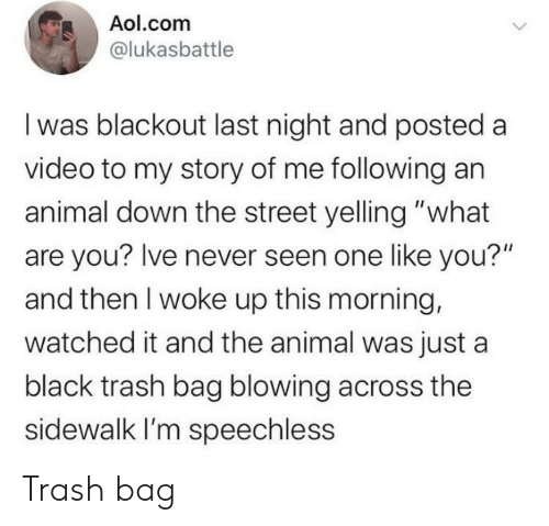 "Trash, Animal, and aol.com: Aol.com  @lukasbattle  I was blackout last night and posted  video to my story of me following an  animal down the street yelling ""what  are you? Ive never seen one like you?""  and then I woke up this morning,  watched it and the animal was just a  black trash bag blowing across the  sidewalk I'm speechless Trash bag"
