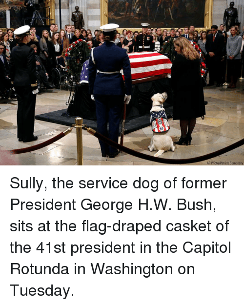 George H. W. Bush: AP Photo/Patrick Semansky Sully, the service dog of former President George H.W. Bush, sits at the flag-draped casket of the 41st president in the Capitol Rotunda in Washington on Tuesday.