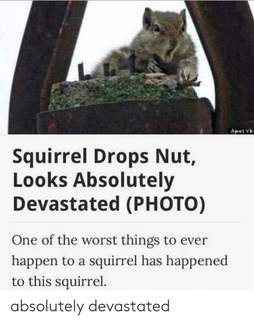 The Worst, Squirrel, and One: Apet Vk  Squirrel Drops Nut,  Looks Absolutely  Devastated (PHOTO)  One of the worst things to ever  happen to a squirrel has happened  to this squirrel. absolutely devastated