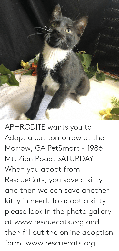 Memes, Aphrodite, and Petsmart: APHRODITE wants you to Adopt a cat tomorrow at the Morrow, GA PetSmart - 1986 Mt. Zion Road. SATURDAY.  When you adopt from RescueCats, you save a kitty and then we can save another kitty in need. To adopt a kitty please look in the photo gallery at www.rescuecats.org and then fill out the online adoption form.  www.rescuecats.org