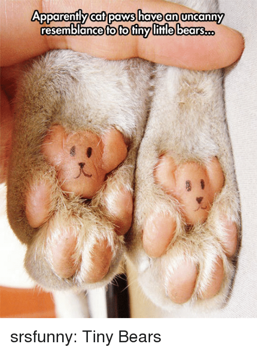 Apparently, Tumblr, and Bears: Apparently caf paws have an uncanny  Apparenflycaflpaws havean uncanny  resemblance to to finy  little bears  o. srsfunny:  Tiny Bears