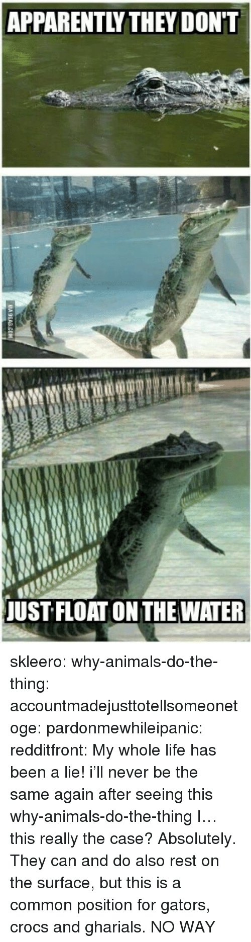 Animals, Apparently, and Crocs: APPARENTLY THEYDON'T  UST FLOAT ON THE WATER skleero:  why-animals-do-the-thing:  accountmadejusttotellsomeonetoge:  pardonmewhileipanic:  redditfront:  My whole life has been a lie!  i'll never be the same again after seeing this  why-animals-do-the-thing I…this really the case?  Absolutely. They can and do also rest on the surface, but this is a common position for gators, crocs and gharials.  NO WAY