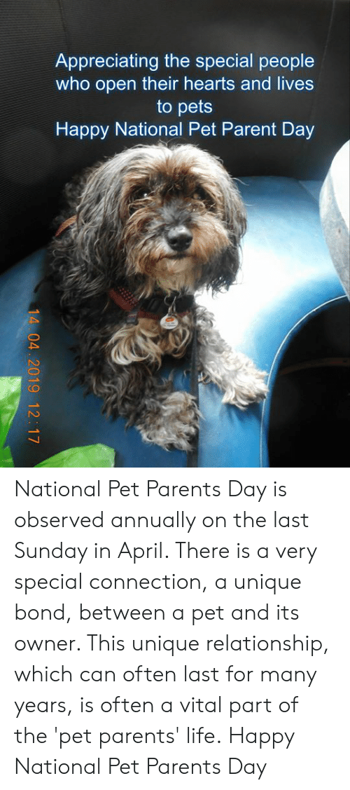 Life, Memes, and Parents: Appreciating the special people  who open their hearts and lives  to pets  Happy National Pet Parent Day National Pet Parents Day is observed annually on the last Sunday in April. There is a very special connection, a unique bond, between a pet and its owner. This unique relationship, which can often last for many years, is often a vital part of the 'pet parents' life. Happy National Pet Parents Day