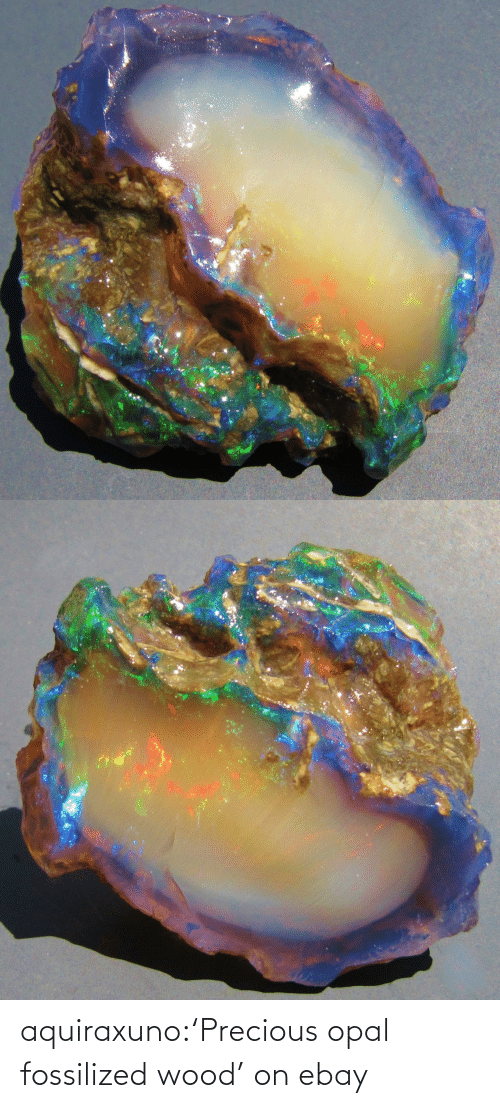 Precious: aquiraxuno:'Precious opal fossilized wood' on ebay