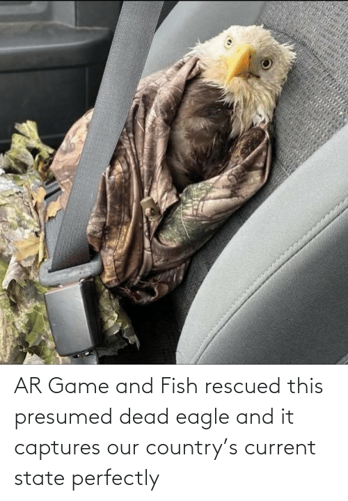 Perfectly: AR Game and Fish rescued this presumed dead eagle and it captures our country's current state perfectly