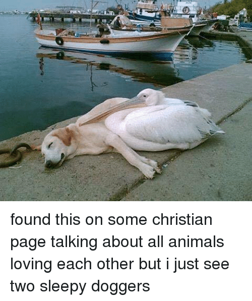 Animeds: arai found this on some christian page talking about all animals loving  each other but i just see two sleepy doggers