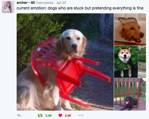 Archer: archer 60 @strmpilots Jan 22  current emotion: dogs who are stuck but pretending everything is fine  3.5K 2.8K