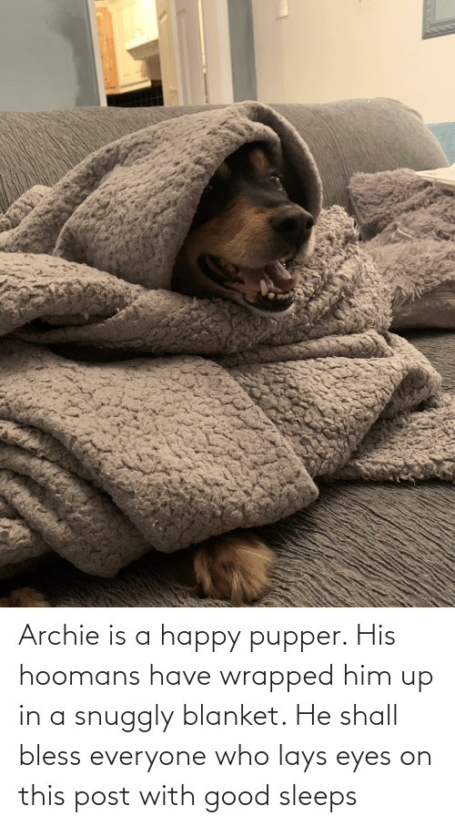 Lay's: Archie is a happy pupper. His hoomans have wrapped him up in a snuggly blanket. He shall bless everyone who lays eyes on this post with good sleeps