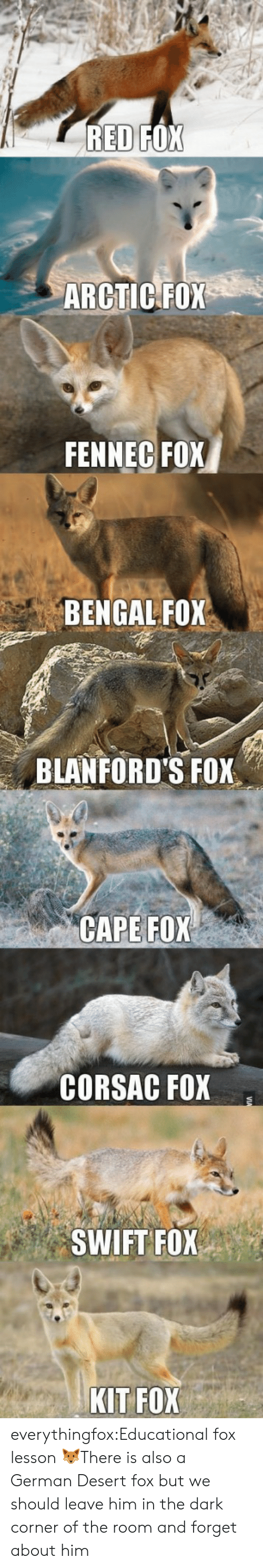 Tumblr, Blog, and Fox: ARCTIC FOX  FENNEC FOX  BENGAL FOX  BLANFORD'S FOX  CAPE FOX  CORSAC FOX  SWIFT FOX  KIT FOX everythingfox:Educational fox lesson 🦊There is also a German Desert fox but we should leave him in the dark corner of the room and forget about him