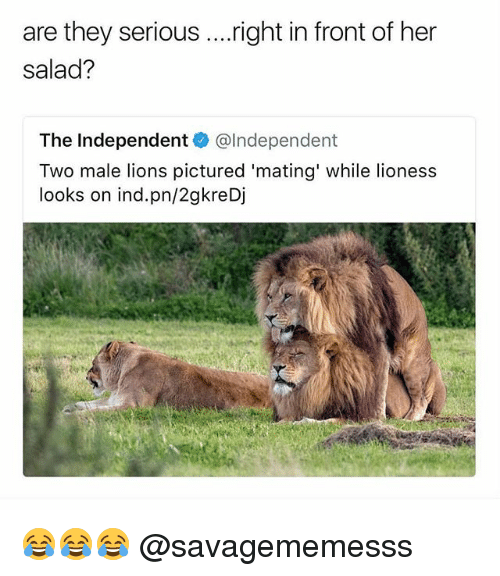lioness: are they serious ....right in front of her  salad?  The Independent@lndependent  Two male lions pictured 'mating' while lioness  looks on ind.pn/2gkreDj 😂😂😂 @savagememesss
