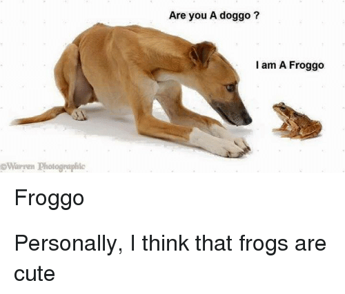 Cute, Doggo, and Think: Are you A doggo ?  I am A Froggo  Waryen Photognaphic  Froggo Personally, I think that frogs are cute