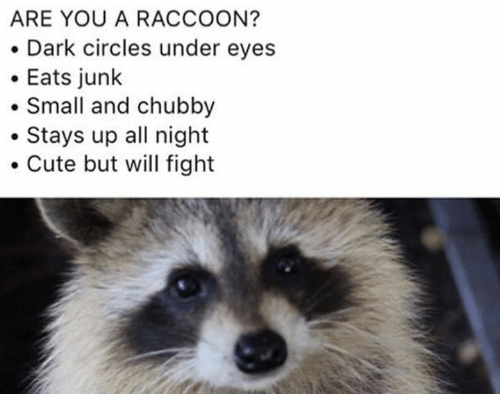 dark circles: ARE YOU A RACCOON?  . Dark circles under eyes  Eats junlk  Small and chubby  .Stays up all night  Cute but will fight