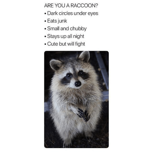 dark circles: ARE YOU A RACCOON?  .Dark circles under eyes  .Eats junk  .Small and chubby  .Stays up all night  . Cute but will fight