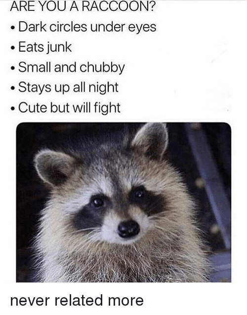 dark circles: ARE YOU A RACCOON?  Dark circles under eyes  Eats junk  * Small and chubby  Stays up all night  .Cute but will fight never related more