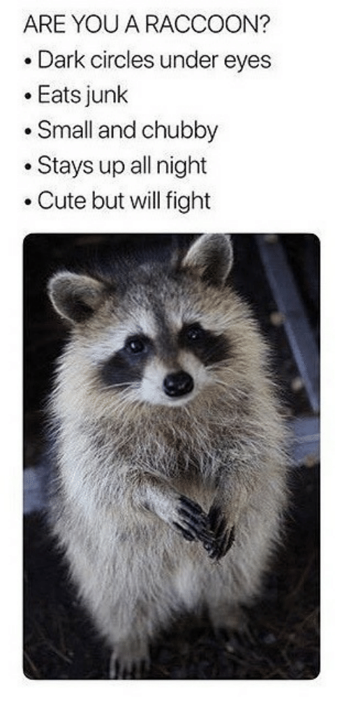 dark circles: ARE YOU A RACCOON?  .Dark circles under eyes  .Eats junk  .Small and chubby  .Stays up all night  .Cute but will fight