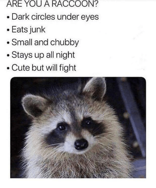 dark circles: ARE YOU A RACCOON?  Dark circles under eyes  .Eats junk  Small and chubby  .Stays up all night  .Cute but will fight