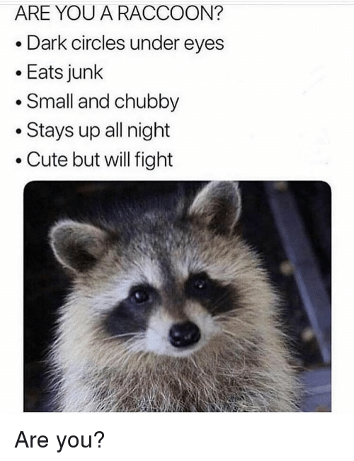 dark circles: ARE YOU A RACCOON?  e Dark circles under eyes  Eats junk  . Small and chubby  .Stays up all night  . Cute but will fight Are you?