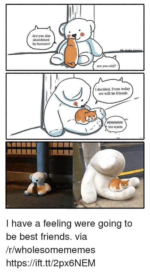 Friends, Best, and Today: Are you also  abandoned  by humans?  are you cold?  I decided. From today  we will be friends  too warm I have a feeling were going to be best friends. via /r/wholesomememes https://ift.tt/2px6NEM