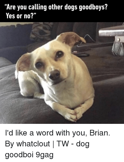 """yes or no: """"Are you calling other dogs goodboys?  Yes or no?'"""" I'd like a word with you, Brian.⠀ By whatclout 