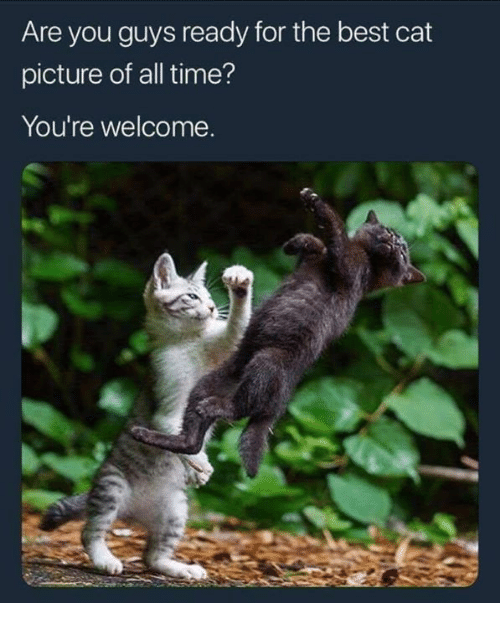Memes, Best, and Time: Are you guys ready for the best cat  picture of all time?  You're welcome.