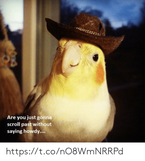 Memes, 🤖, and You: Are you just gonna  scroll past without  saying howdy.... https://t.co/nO8WmNRRPd
