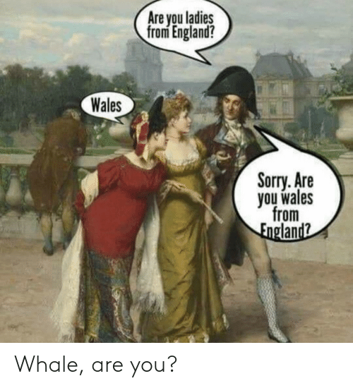 England, Sorry, and Wales: Are you ladies  from England?  Wales  Sorry. Are  you wales  from  England? Whale, are you?