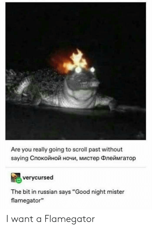 "Good, Russian, and You: Are you really going to scroll past without  saying Cпокойной ночи, мистер Флеймгатор  verycursed  The bit in russian says ""Good night mister  flamegator I want a Flamegator"