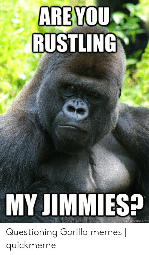 Gorilla Memes: ARE YOU  RUSTLING  MY JIMMIESP  quickmeme.com Questioning Gorilla memes   quickmeme