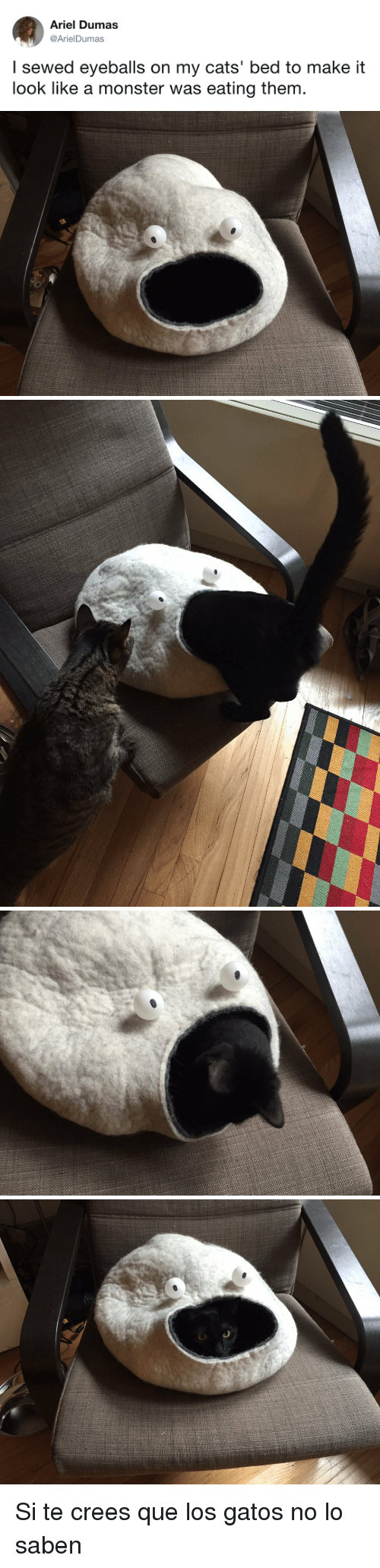 los gatos: Ariel Dumas  @ArielDumas  I sewed eyeballs on my cats' bed to make it  look like a monster was eating them <p>Si te crees que los gatos no lo saben</p>