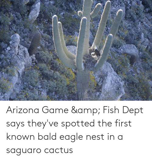 Nest: Arizona Game & Fish Dept says they've spotted the first known bald eagle nest in a saguaro cactus