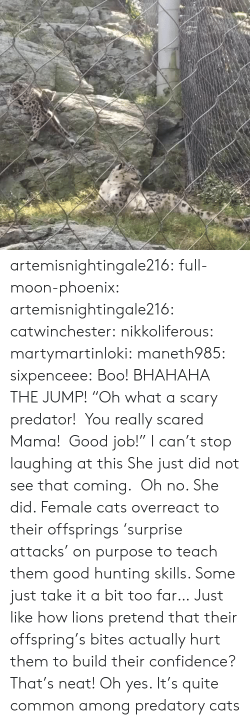 "oh yes: artemisnightingale216: full-moon-phoenix:   artemisnightingale216:   catwinchester:   nikkoliferous:  martymartinloki:  maneth985:  sixpenceee: Boo! BHAHAHA THE JUMP!  ""Oh what a scary predator!  You really scared Mama!  Good job!""   I can't stop laughing at this  She just did not see that coming.    Oh no. She did. Female cats overreact to their offsprings 'surprise attacks' on purpose to teach them good hunting skills. Some just take it a bit too far…   Just like how lions pretend that their offspring's bites actually hurt them to build their confidence? That's neat!   Oh yes. It's quite common among predatory cats"