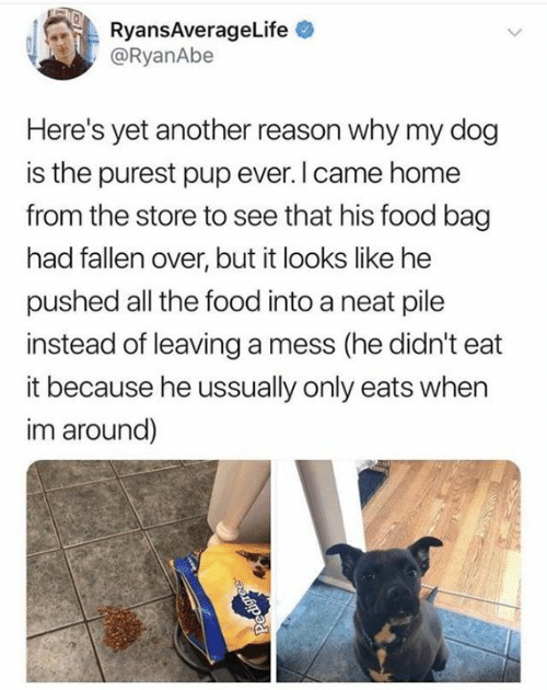 Dank, Food, and Home: ARyansAverageLife  @RyanAbe  Here's yet another reason why my dog  is the purest pup ever.I came home  from the store to see that his food bag  had fallen over, but it looks like he  pushed all the food into a neat pile  instead of leaving a mess (he didn't eat  it because he ussually only eats when  im around)  Pedigre