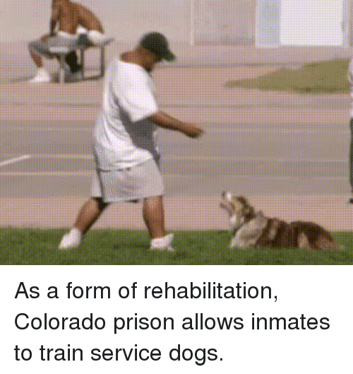 Dogs, Funny, and Prison: As a form of rehabilitation, Colorado prison allows inmates to train service dogs.