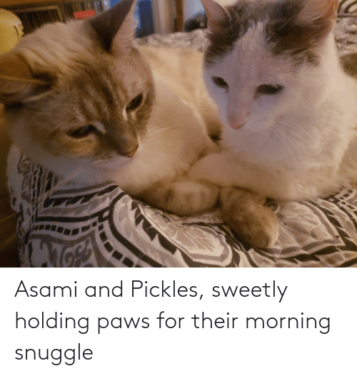 Paws: Asami and Pickles, sweetly holding paws for their morning snuggle