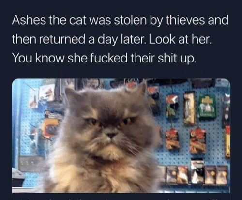 Memes, Shit, and 🤖: Ashes the cat was stolen by thieves and  then returned a day later. Look at her  You know she fucked their shit up.