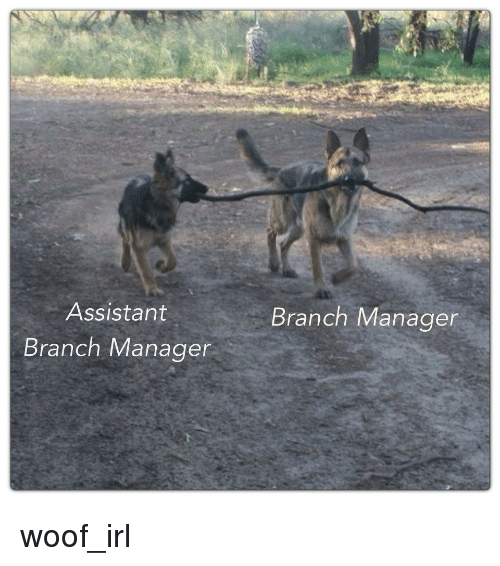 Dog IRL: Assistant  Branch Manager  Branch Manager woof_irl