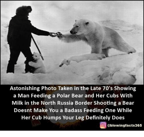 polarized: Astonishing Photo Taken in the Late 70's Showing  a Man Feeding a Polar Bear and Her Cubs With  Milk in the North Russia Border Shooting a Bear  Doesnt Make You a Badass Feeding One While  Her Cub Humps Your Leg Definitely Does  g @blowingfacts365