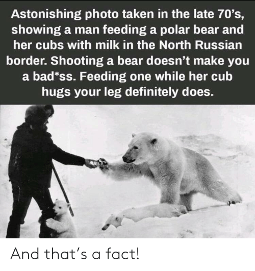 cub: Astonishing photo taken in the late 70's,  showing a man feeding a polar bear and  her cubs with milk in the North Russian  border. Shooting a bear doesn't make you  a bad*ss. Feeding one while her cub  hugs your leg definitely does. And that's a fact!