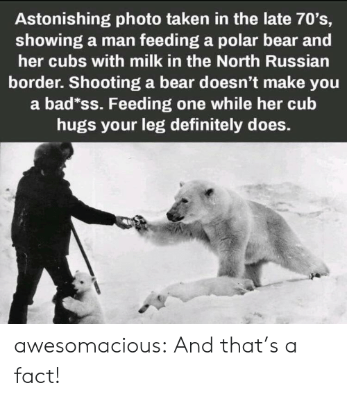 feeding: Astonishing photo taken in the late 70's,  showing a man feeding a polar bear and  her cubs with milk in the North Russian  border. Shooting a bear doesn't make you  a bad*ss. Feeding one while her cub  hugs your leg definitely does. awesomacious:  And that's a fact!